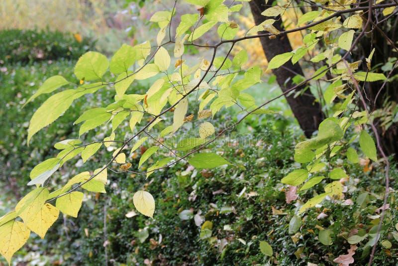Herbst mit bunten Blättern am botanischen Garten lizenzfreie stockfotos