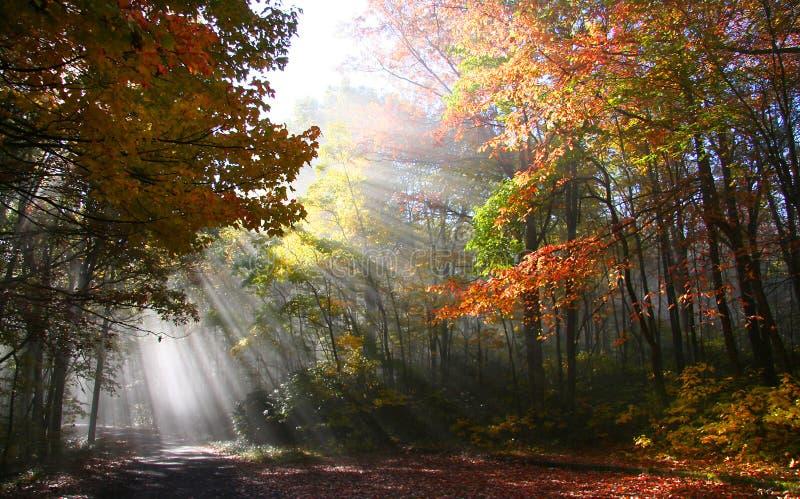Herbst-Morgen stockbilder