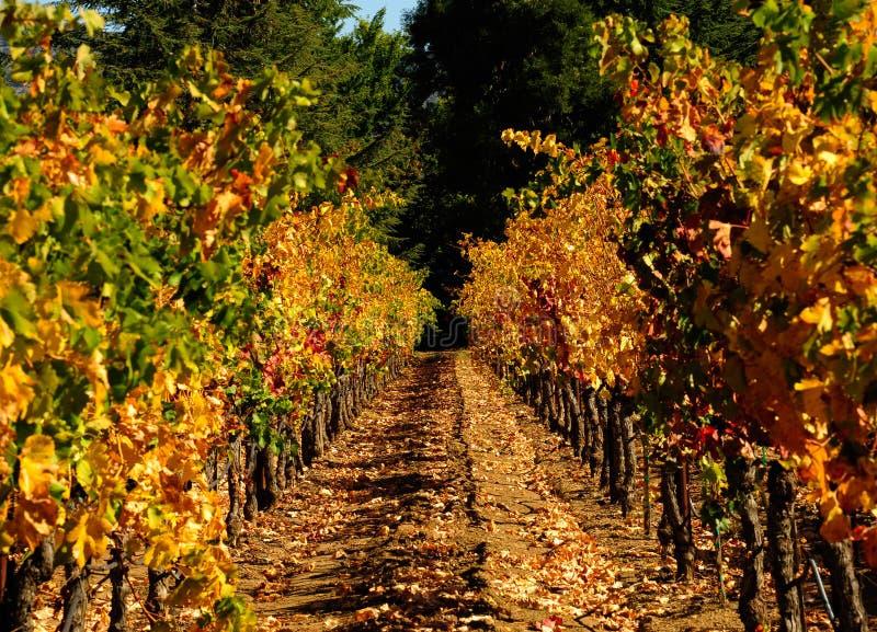 Herbst in Napa lizenzfreies stockbild