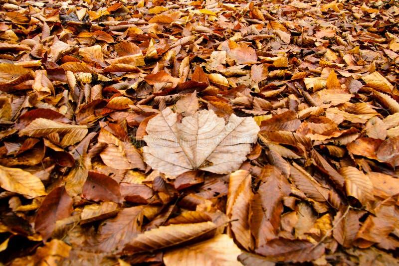 Herbst-nasse goldene Blätter auf dem Boden stockfotografie