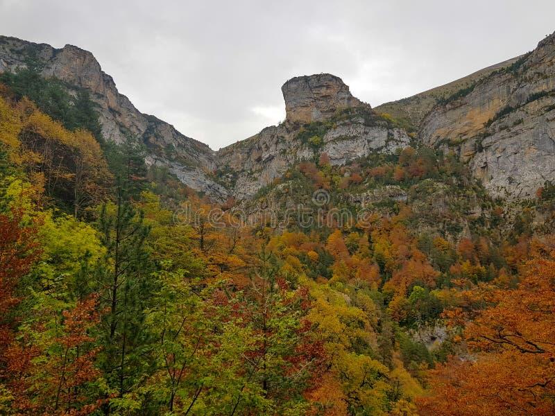 Herbst in Nationalpark Ordesa, Pyren?en, Huesca, Aragonien, Spanien Wenn der ausgezeichnete Farbton durch die Blätter gebildet is stockfoto