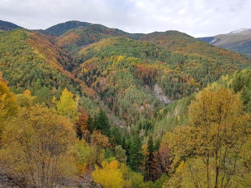 Herbst in Nationalpark Ordesa, Pyren?en, Huesca, Aragonien, Spanien Wenn der ausgezeichnete Farbton durch die Blätter gebildet is stockfotografie