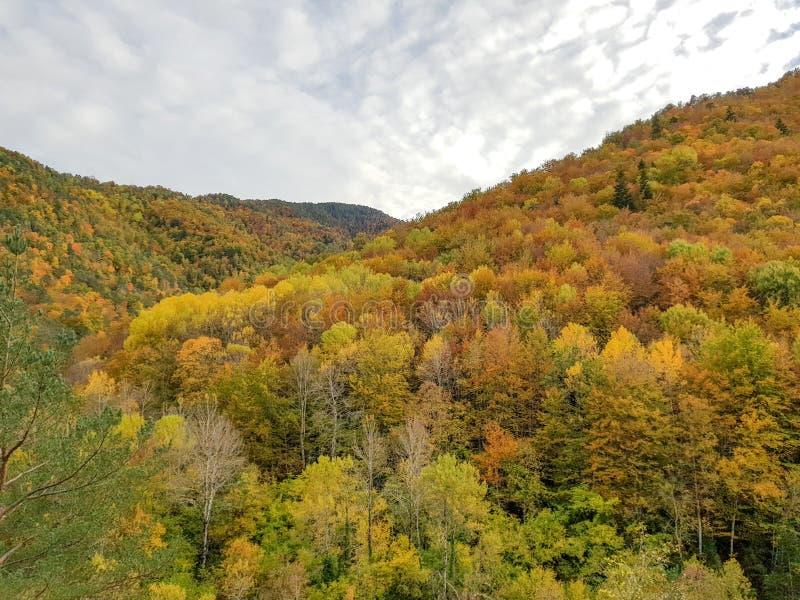 Herbst in Nationalpark Ordesa, Pyren?en, Huesca, Aragonien, Spanien Wenn der ausgezeichnete Farbton durch die Blätter gebildet is lizenzfreie stockbilder