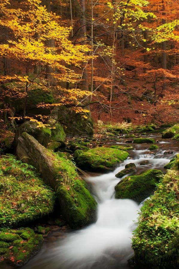 Herbst-Nebenfluss stockbild