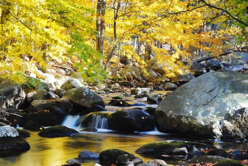 Herbst-Nebenfluss-Felsen und gelbe Bäume lizenzfreie stockbilder