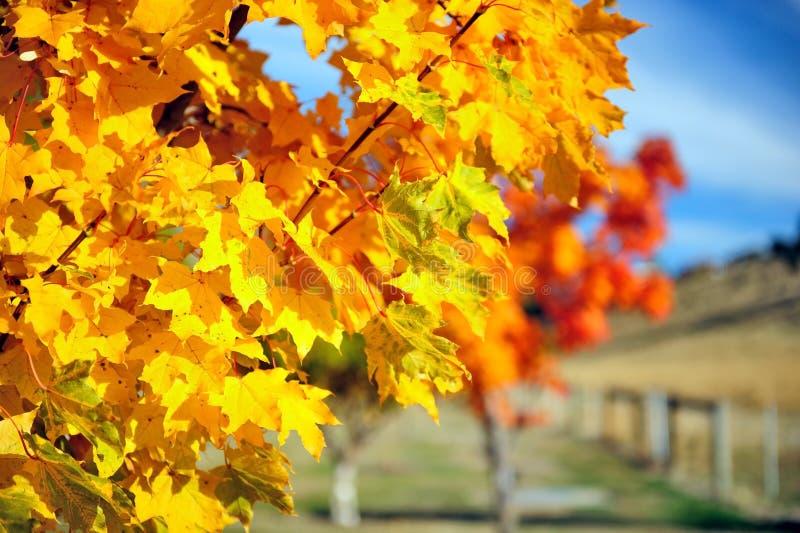 Herbst in Neuseeland stockbild