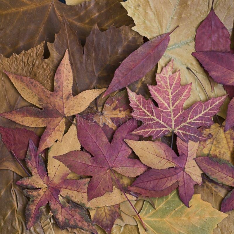 Herbst noch L ife stockfotografie