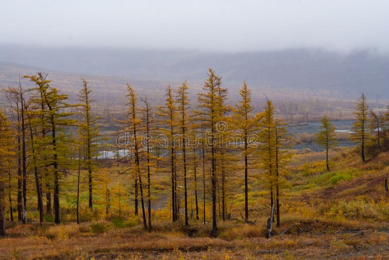 Herbst in Norilsk stockfoto