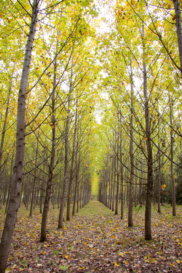 Herbst-Obstgarten lizenzfreie stockfotografie