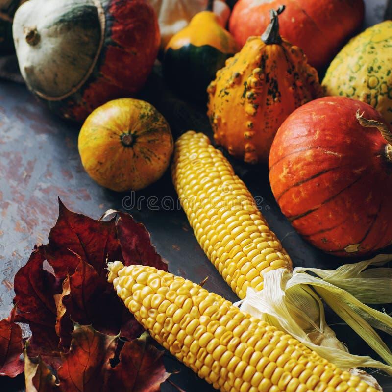 Herbst- oder Danksagungshintergrund mit dekorativem Kürbis, Mais, Kegel, wallnuts, Ahornblätter, Eicheln auf dunklem Holztisch lizenzfreie stockbilder