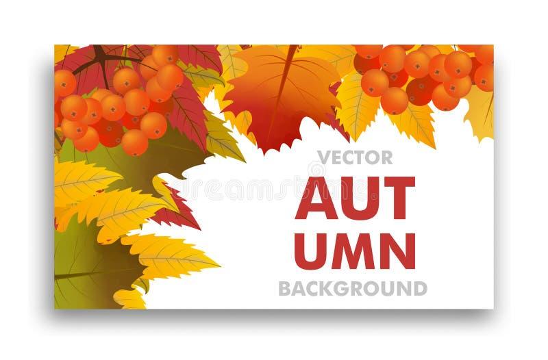 Herbst- oder Fallhintergrund mit Niederlassung der Eberesche und der Ahornblätter Rahmen-Verkauf oder zurück zu Schule Vektor lizenzfreie abbildung
