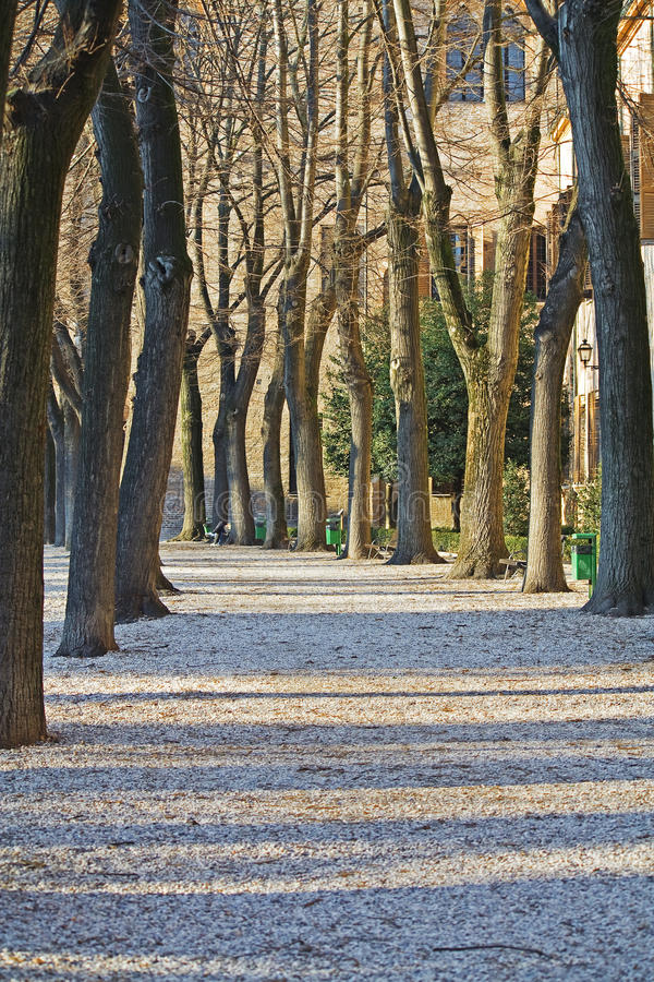 Herbst-Park lizenzfreie stockfotos