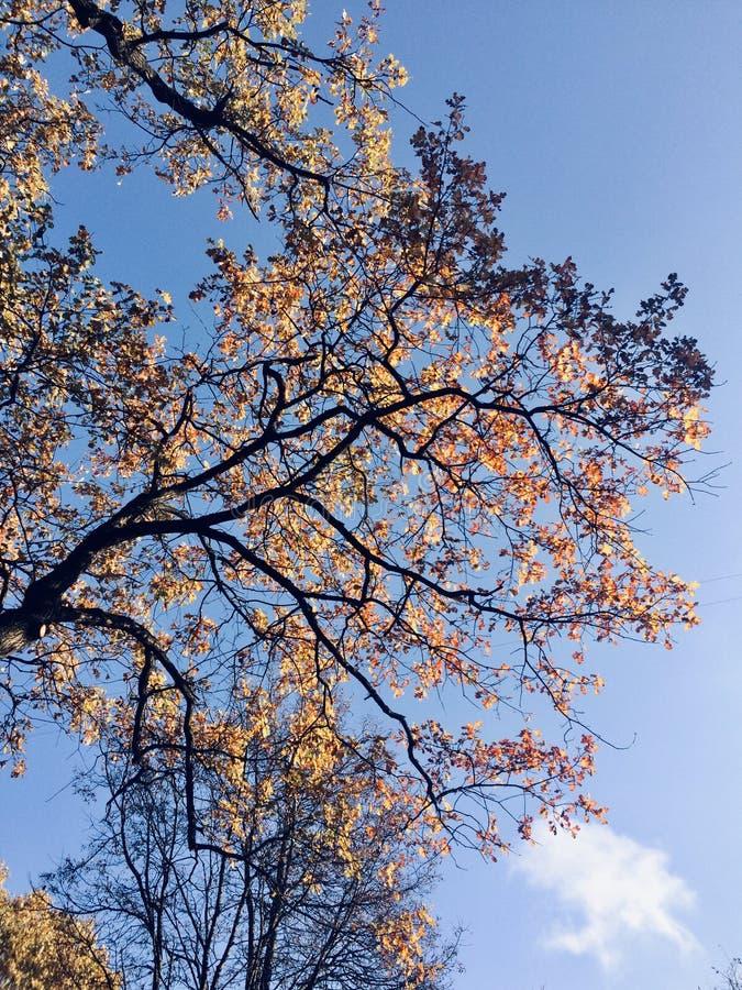 Herbst am Park stockfotos