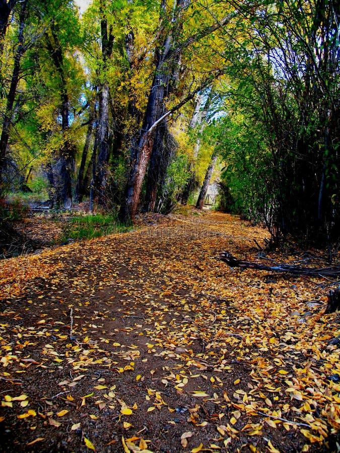 Download Herbst-Pfad stockbild. Bild von pfad, bäume, berge, park - 26895