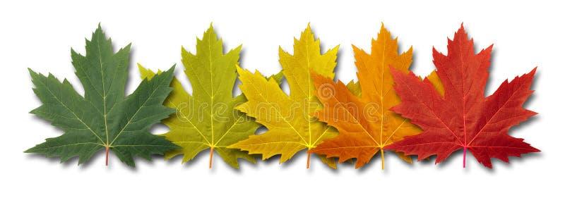 Herbst-Rand-Element lizenzfreie abbildung