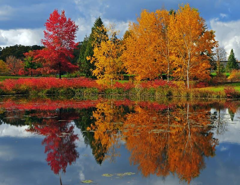 Herbst-Reflexionen stockbild