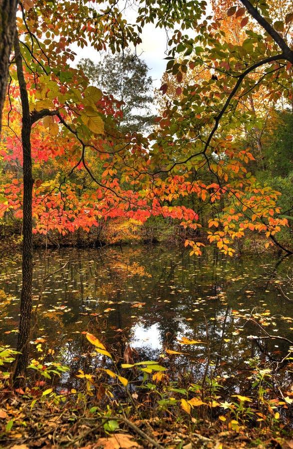 Download Herbst-Reflexionen stockfoto. Bild von fall, teich, ozarks - 27728270