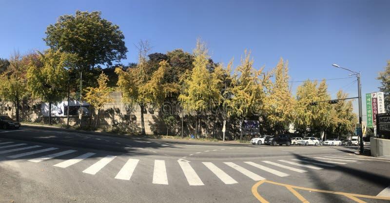 Herbst in Südkorea stockbild