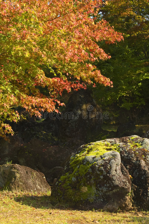 Herbst schaukelt Ecke lizenzfreie stockfotos