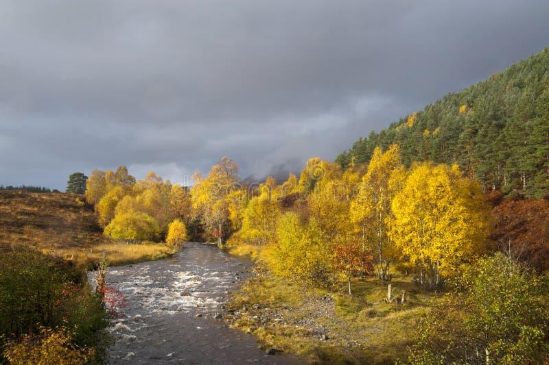 Herbst, Schlucht Affric lizenzfreies stockbild
