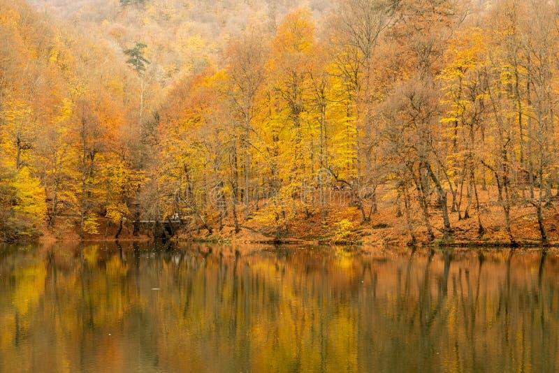 Herbst am See lizenzfreie stockbilder