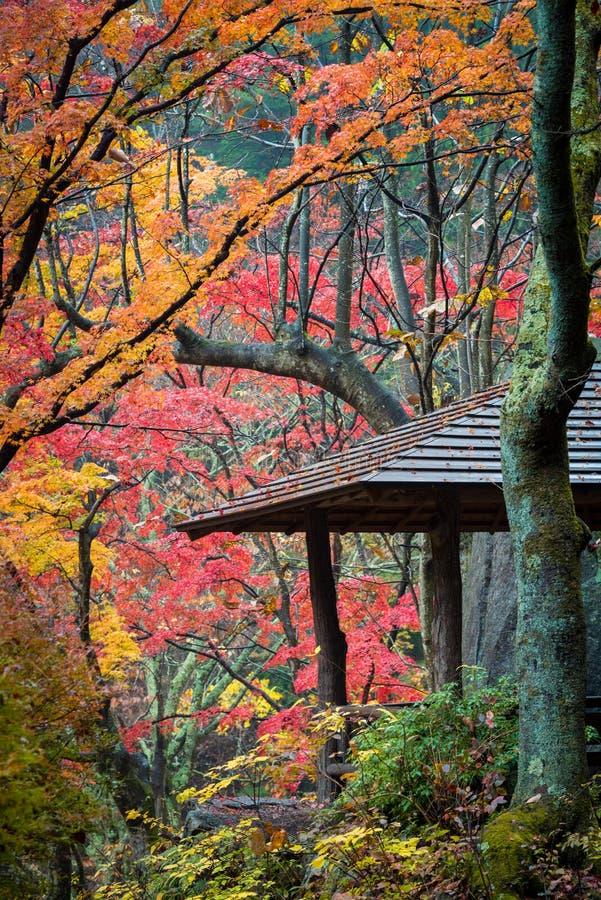 Herbst in Shosenkyo-Schlucht lizenzfreies stockbild