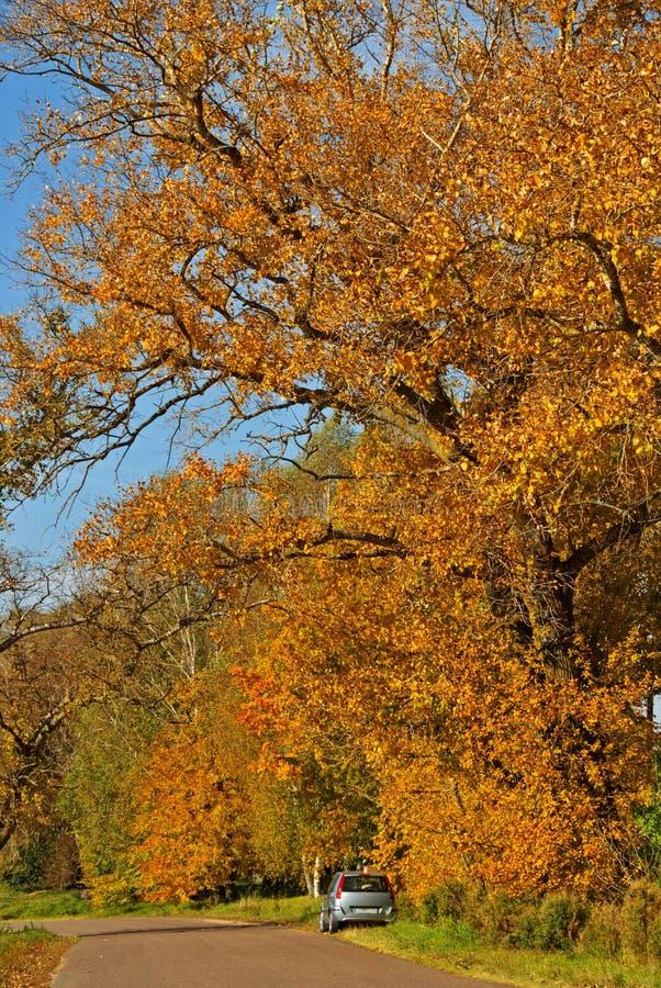Herbst-Straße Stockfotografie