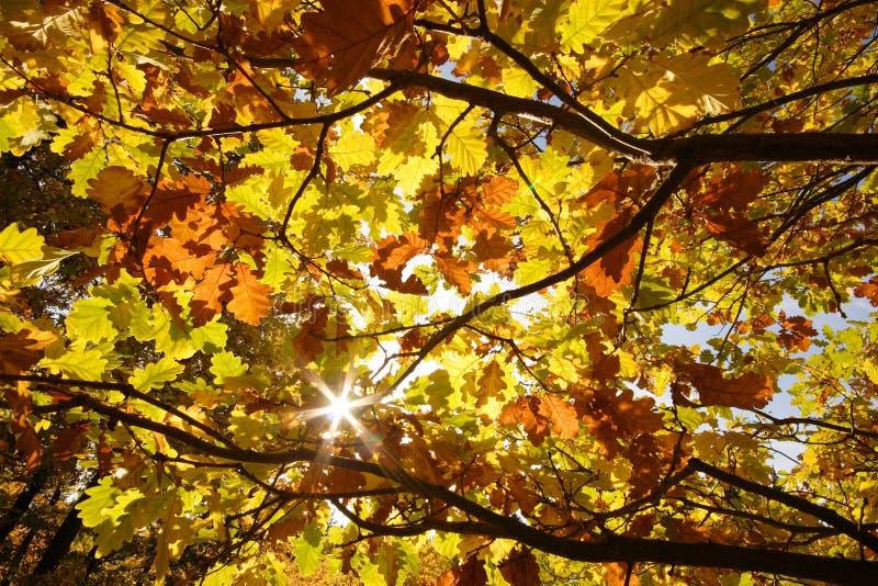 Herbst Sun lizenzfreie stockbilder