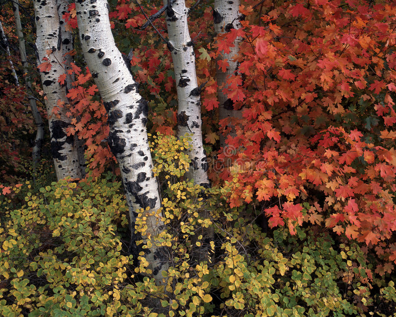 Herbst-Szene lizenzfreie stockfotos