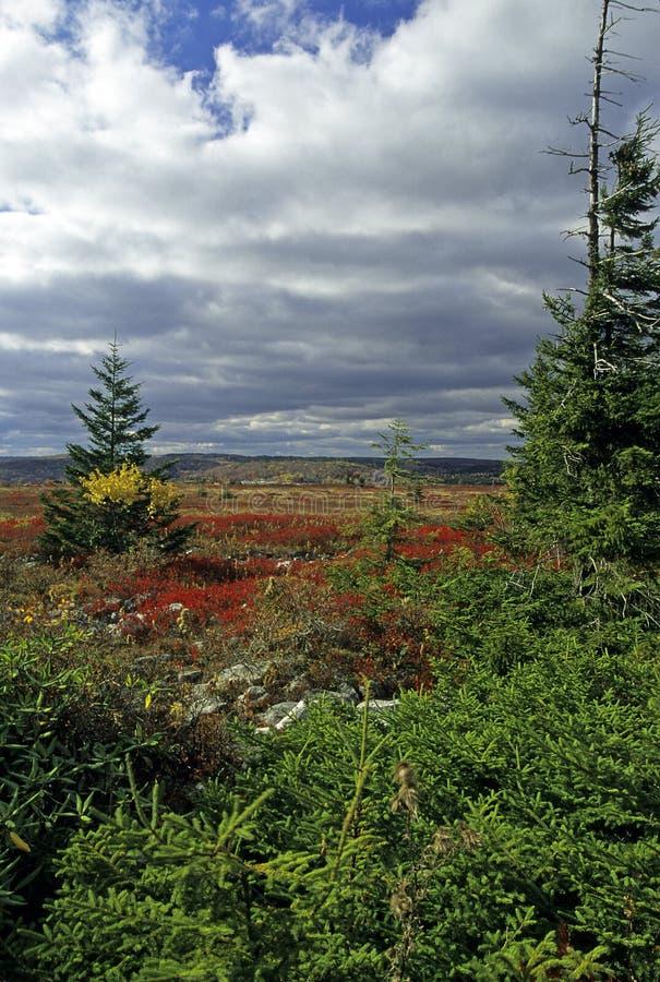 Herbst szenisch stockbild