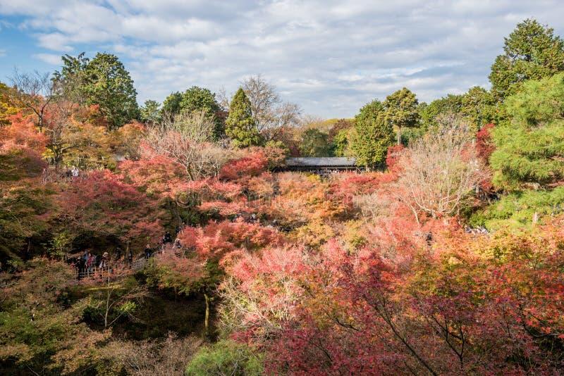 Herbst an tofukuji Tempel stockbilder