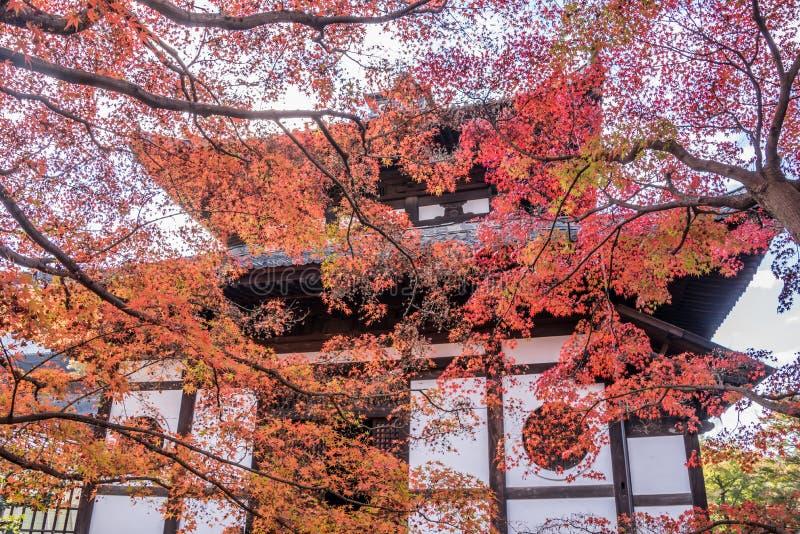Herbst an tofukuji Tempel stockfoto