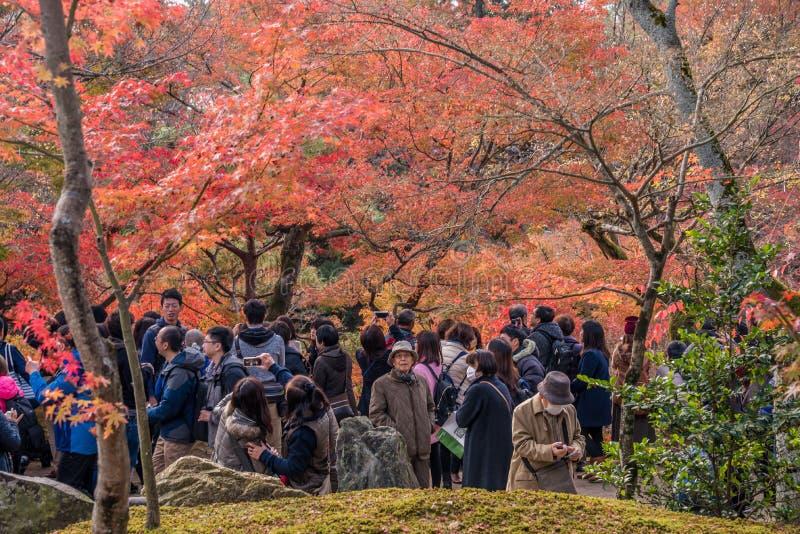 Herbst an tofukuji Tempel stockbild