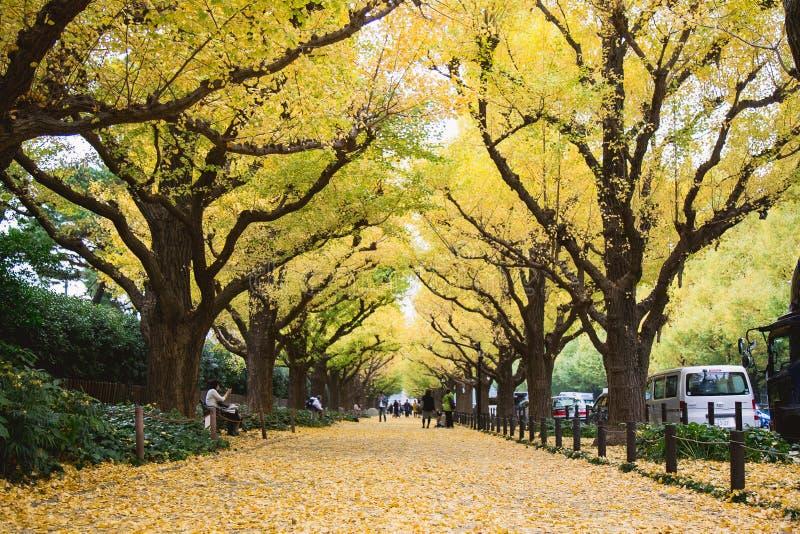 Herbst in Tokyo herein mit gelbem Blatt des Ginkgobaumfalles aus den Grund stockfotos