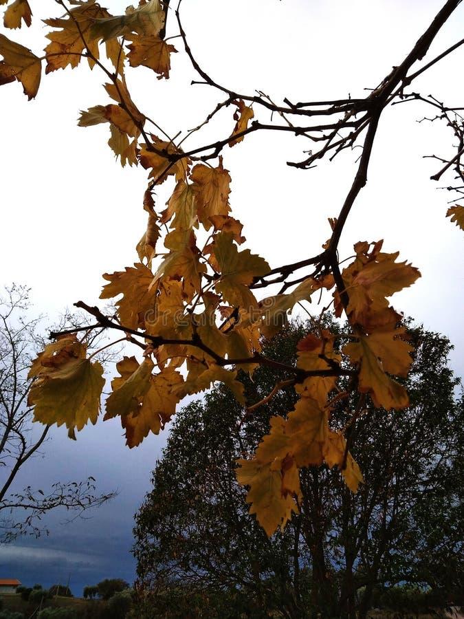 Herbst in Toskana lizenzfreies stockfoto