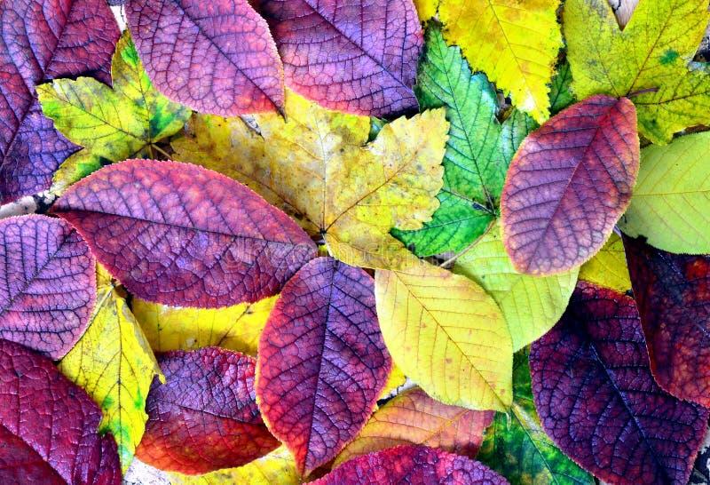 Herbst treibt Hintergrund Blätter stockbild