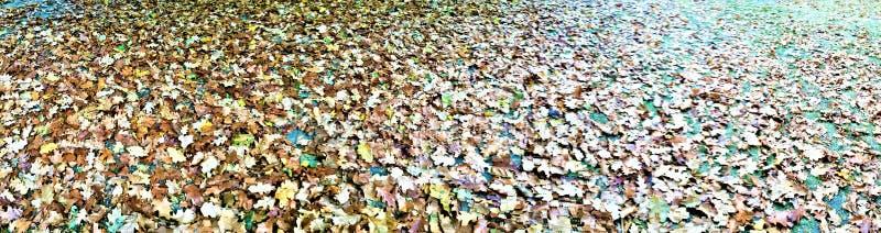 Herbst und Blätter lizenzfreie stockbilder