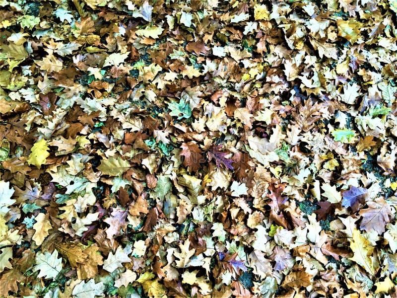 Herbst und Blätter stockbilder