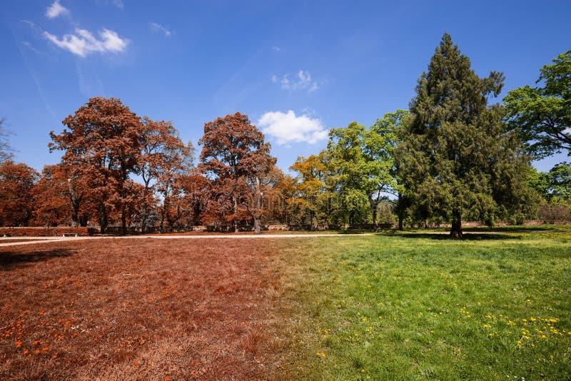 Herbst- und Sommerpark stockbild