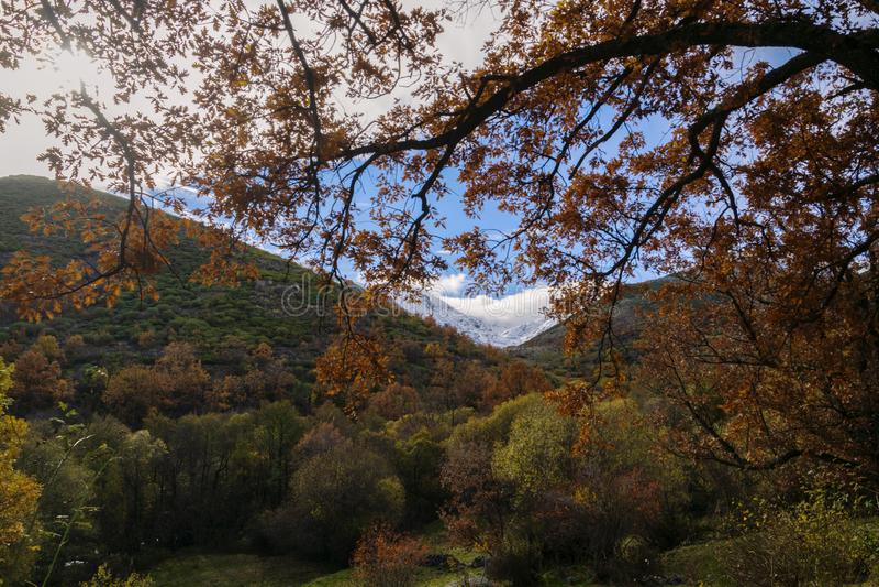 Herbst- und Winterkontrast an einem kalten Tag lizenzfreie stockfotos