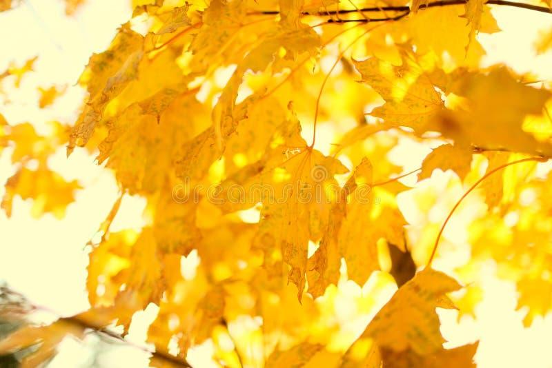 Herbst unscharfer Hintergrund lizenzfreies stockfoto