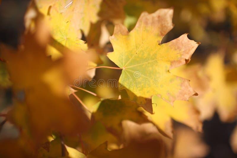 Herbst unscharfer Hintergrund stockbilder