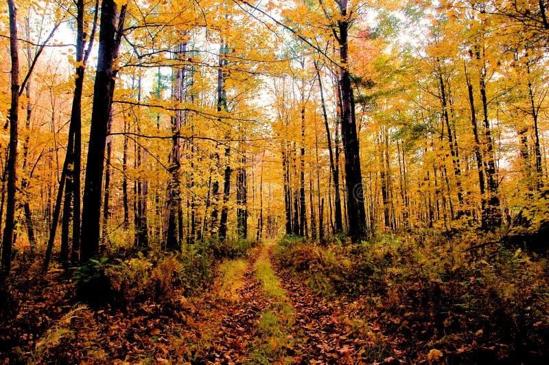 Herbst in Vermont stockbild