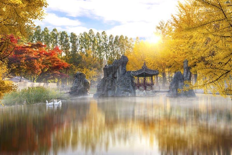 Herbst von Nami-Insel in moning Südkorea lizenzfreie stockfotos