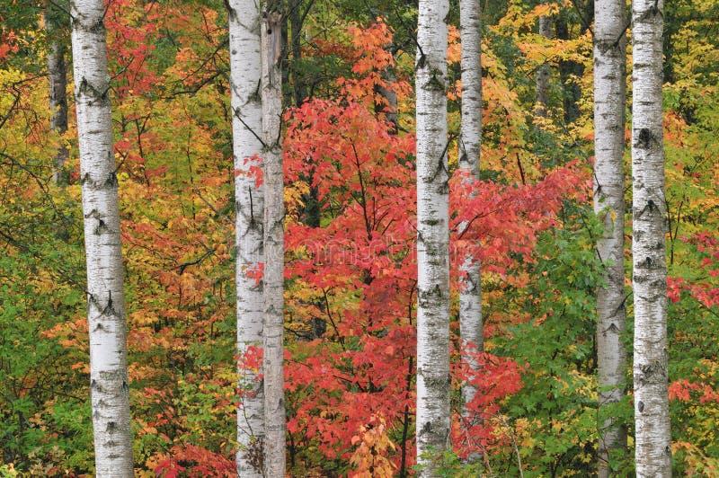 Herbst-Wald stockfotografie