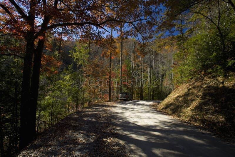 Herbst, Wald-Straße, TN stockbilder