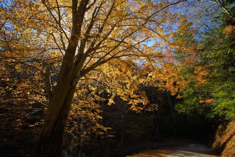 Herbst, Wald-Straße, TN stockfotos