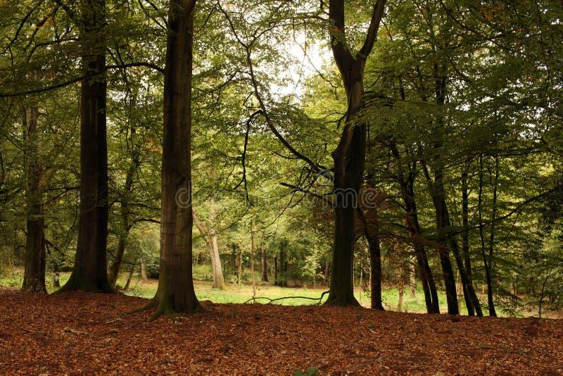 Herbst-Waldland lizenzfreie stockbilder