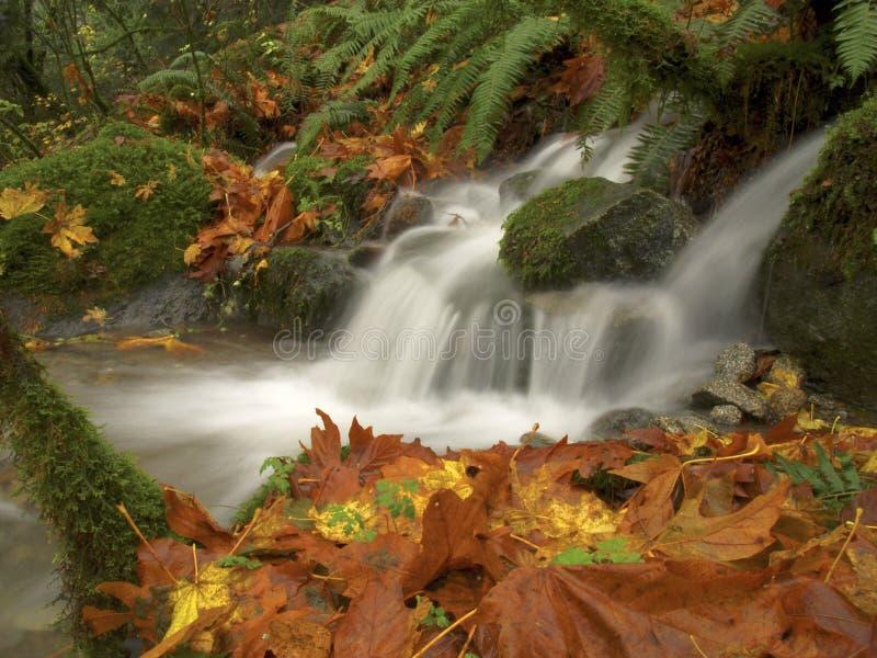Herbst-Wasserfall stockbild
