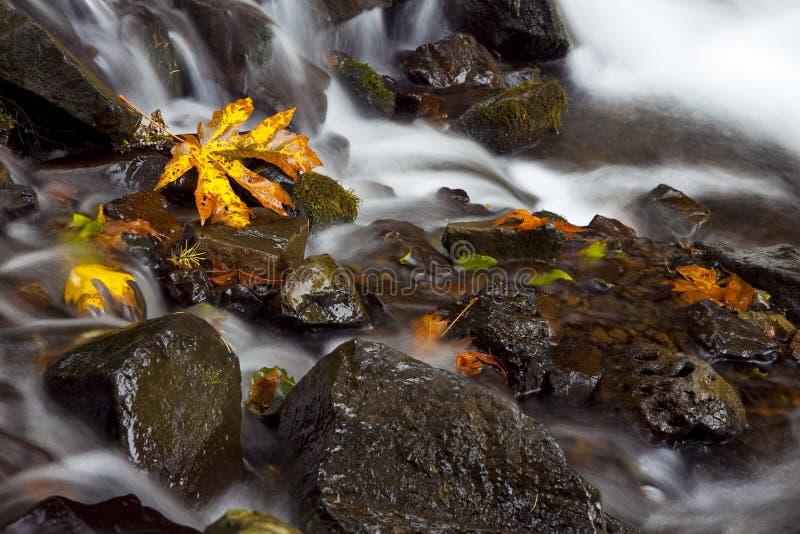 Herbst-Wasserfall, auf lagerfotographie der Natur lizenzfreie stockfotografie